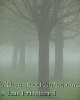 Photograph of Misty Trees from www.MilwaukeePhotos.com (C) Ian Pritchard