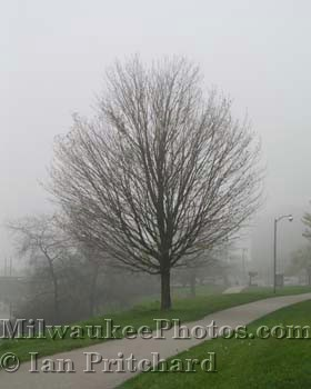 Photograph of Tree in Mist from www.MilwaukeePhotos.com (C) Ian Pritchard
